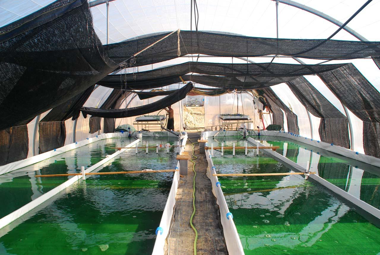 bassins spiruline cévenn' algues